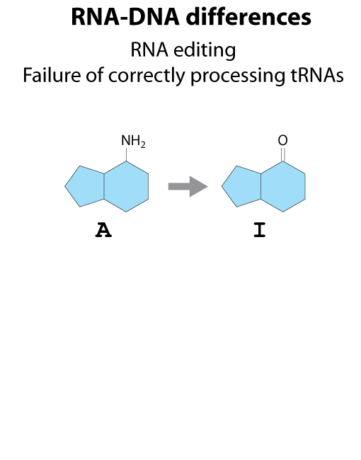 rna-dna-differences
